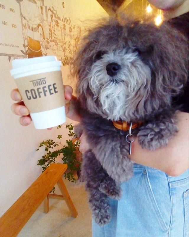お散歩途中のエルちゃん🐕🐕🐕 #お人形さんみたい#エルちゃん#coffee#coffeetime#coffeestand#tintocoffee#cake#cookie#お菓子#ケーキ#クッキー#マフィン#コーヒー#コーヒースタンド#渋谷#青山