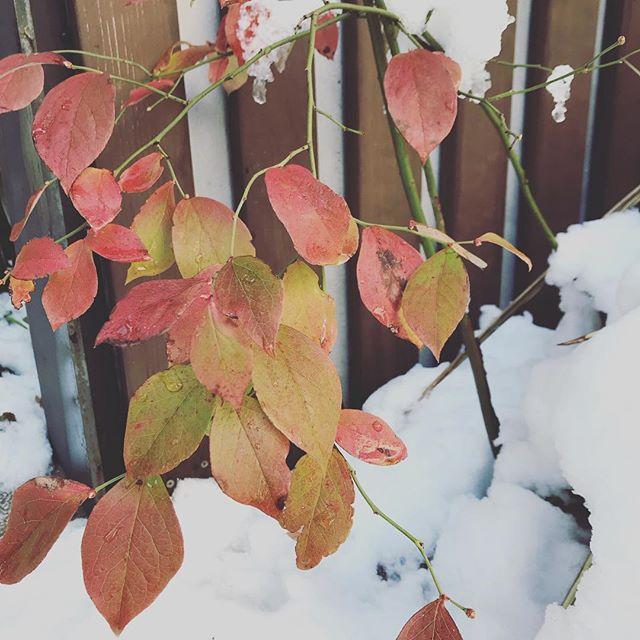 【営業時間変更のお知らせ】おはようございます。雪が積もりましたね。本日は都合により、11:30にオープンいたします。ご迷惑お掛けしますが、よろしくお願いいたします。